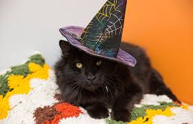 gato_vestido